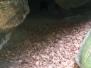 Jeskyně s kořínky na stropě